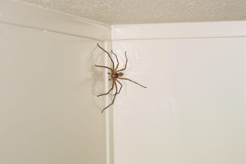 Огромный в паук квартире