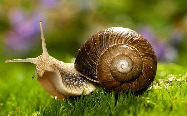 Dream about snails