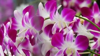 Pink purple flower arrangements