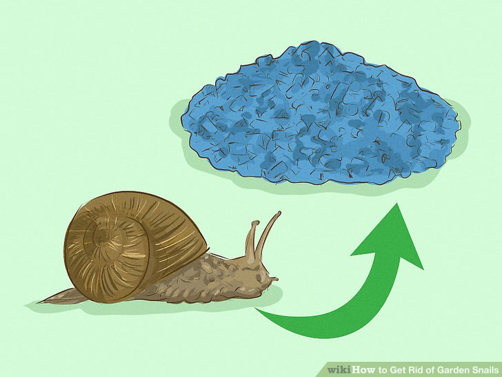 How to breed garden snails