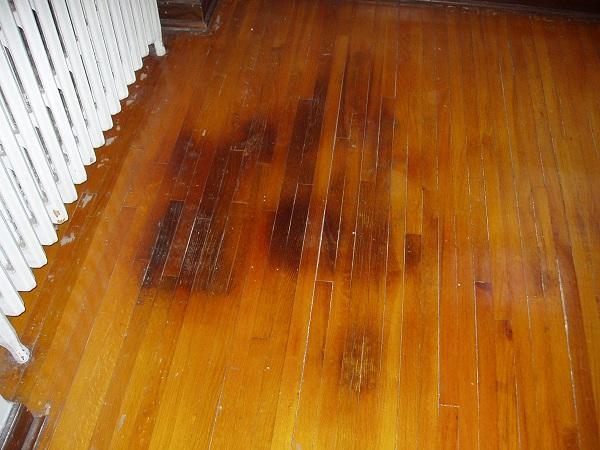 Dog nails on hardwood floors