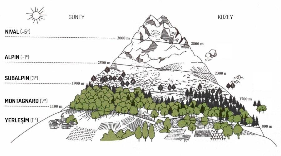 Alpin Zonun Enlemlere Göre Dağılımı