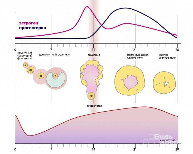 Норма прогестерона у женщин