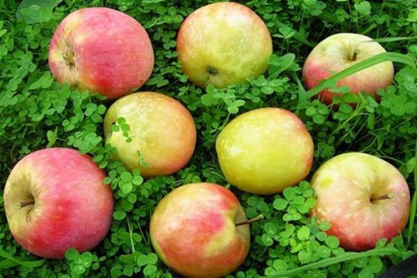 Конфитюр из яблок с лимоном