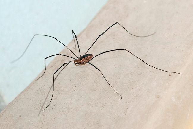 Почему живут пауки в квартире