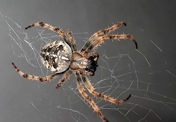 В квартире появились пауки к чему