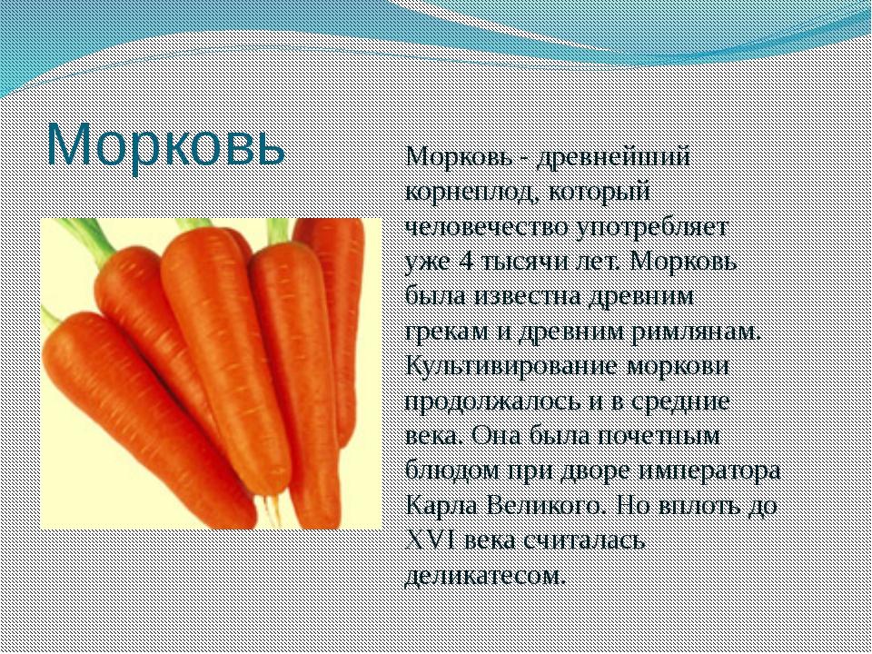 Можно морковь беременным