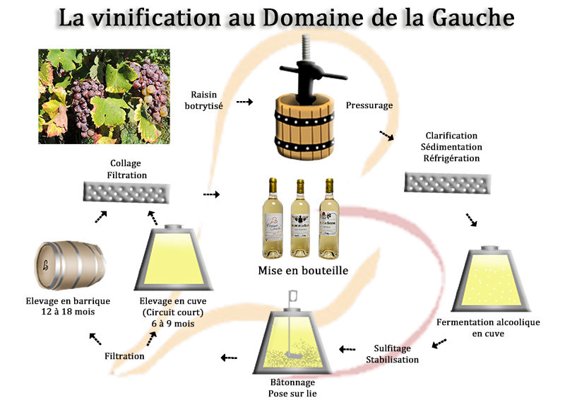 Vinification Sauternes