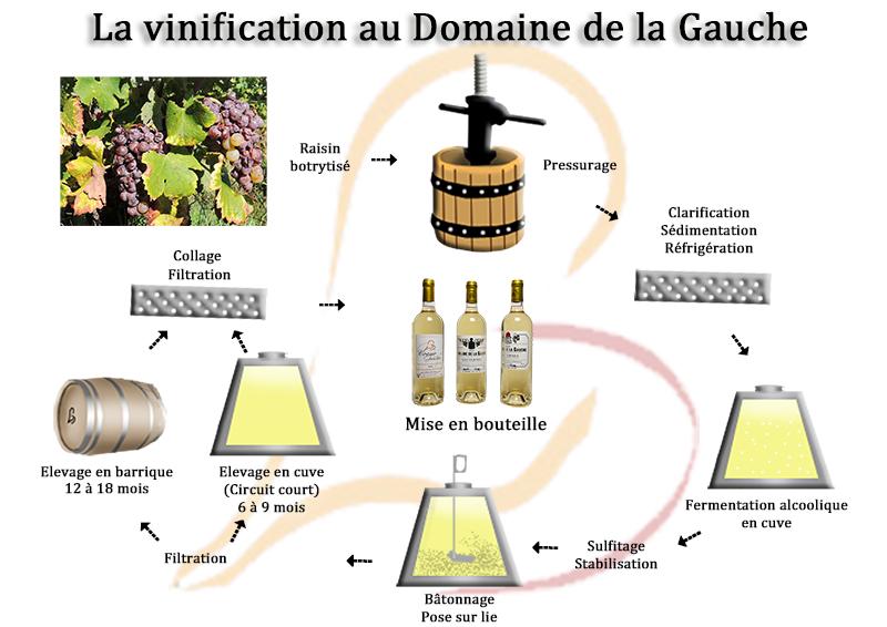 Vinification Sauternes