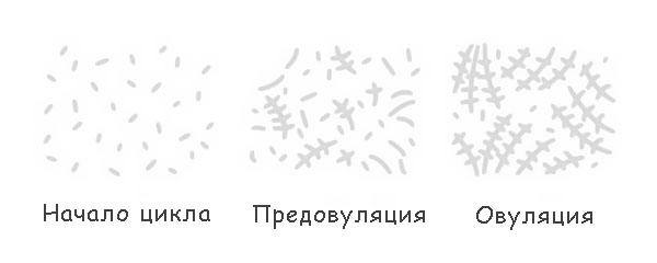 Овуляции признаки