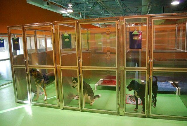 Организация гостиницы для животных