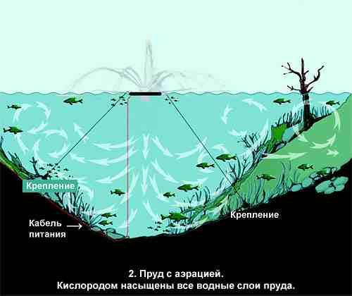 Разведение карпа в искусственных водоемах как бизнес