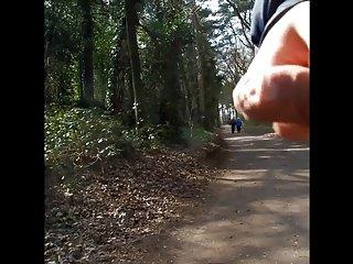 Мигание старая пара в лесу