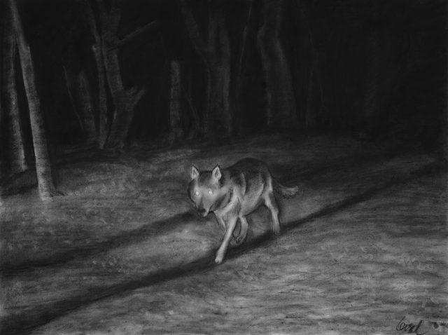 Clement Loisel - Nocturnal