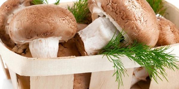 Бизнес план шампиньоны выращивание в домашних условиях