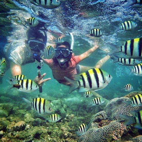 paket tour snorkeling nglambor