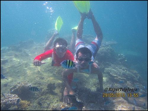 trip murah karimunjawa snorkling