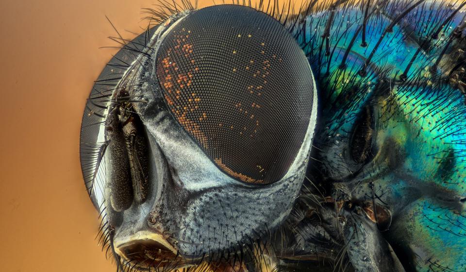 К чему снится мухи в доме