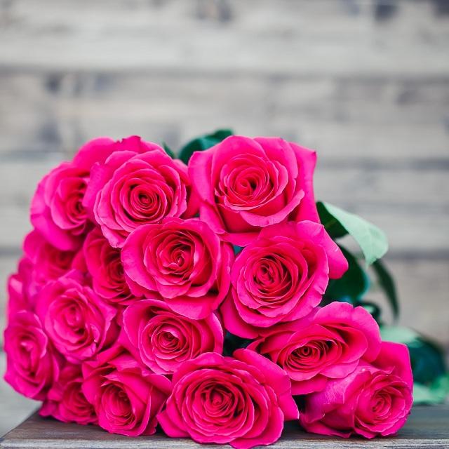Пинк флойд сорт розы фото