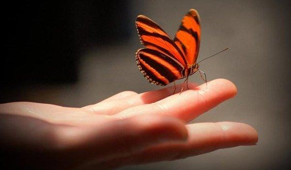 К чему снятся бабочки голубые