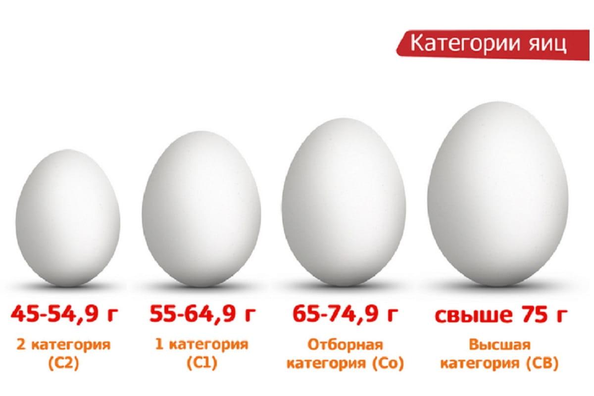 Сколько весит 1 куриное яйцо