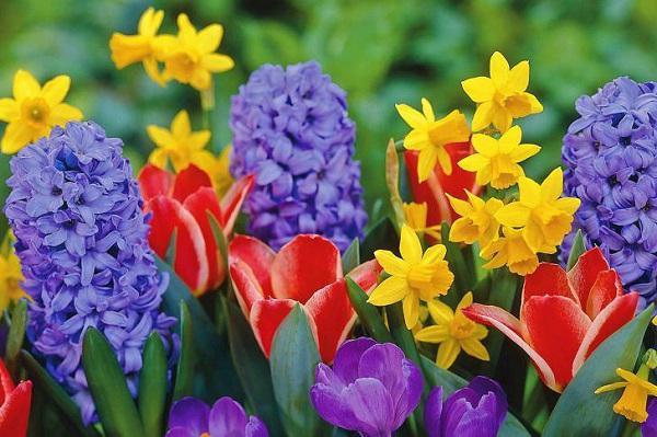 Когда садить тюльпаны под зиму на урале