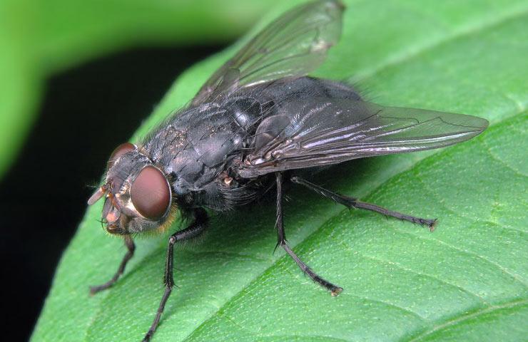 Убить муху примета