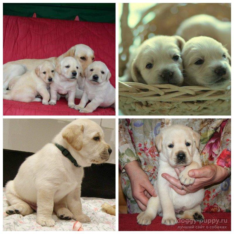 1 месяц щенок уход
