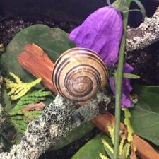 What do snails do to your garden