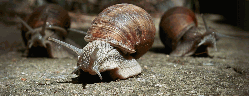 Growing snails for profit