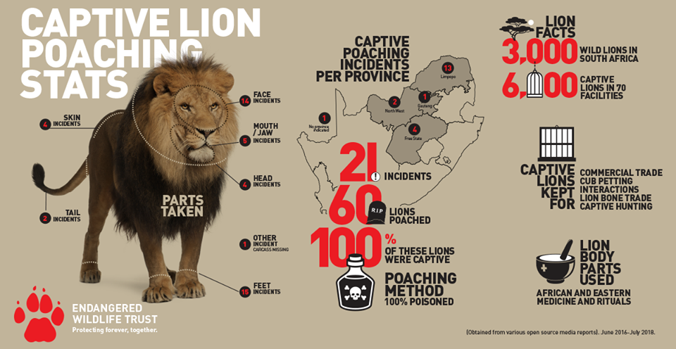 Drakenstein lion sanctuary