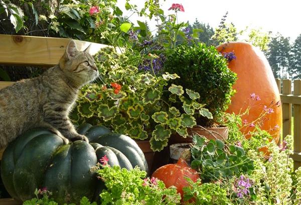 Кот и осенний урожай