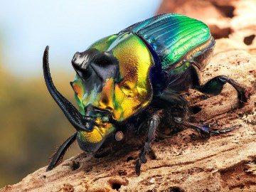 Видеть черных жуков во сне
