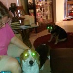 best dog sitters in Boulder CO