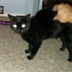 Kitten Sitter Boulder CO 239-692-4898