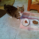 Overnight Cat Sitting Boulder CO 239-692-4898