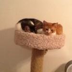 cat sitters in naples