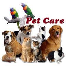 Best Boulder Pet Care