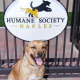 Humane Society of Naples