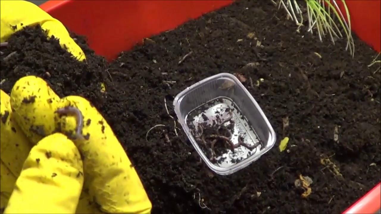 Чем кормить червей в домашних условиях