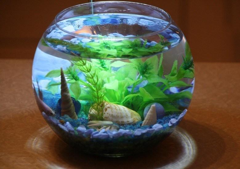Сон аквариум с рыбками разбился