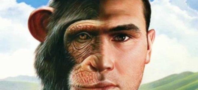 К чему видеть во сне обезьяну