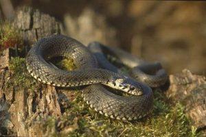 Как избавиться от ужей и змей на участке: что делать, если они поселились в доме
