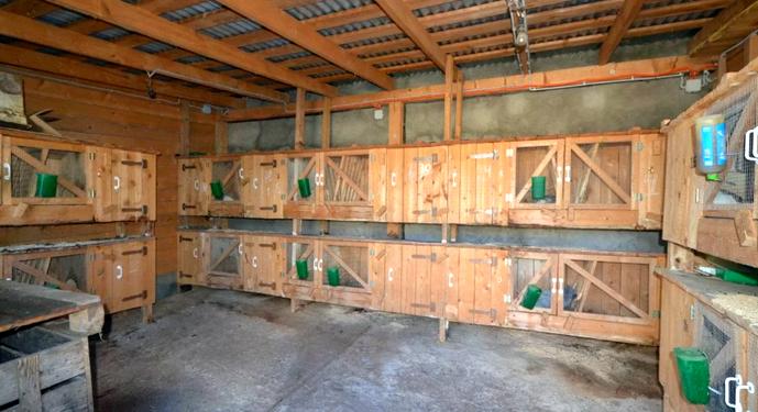Выращивание кроликов в гараже
