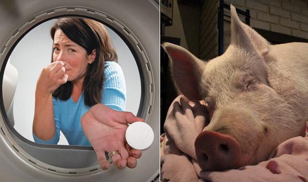 Причины плохого запаха из стиральной машины