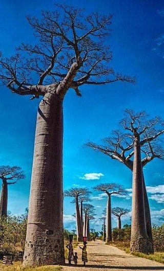 Мадагаскар остров на карте