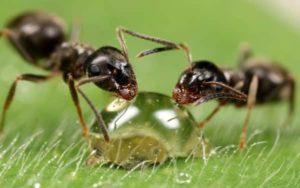 Выбираем средство для борьбы с домашними муравьями в вашей квартире