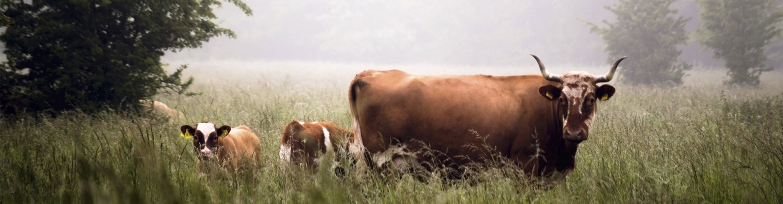 Скачать бизнес план фермерского хозяйства бесплатно