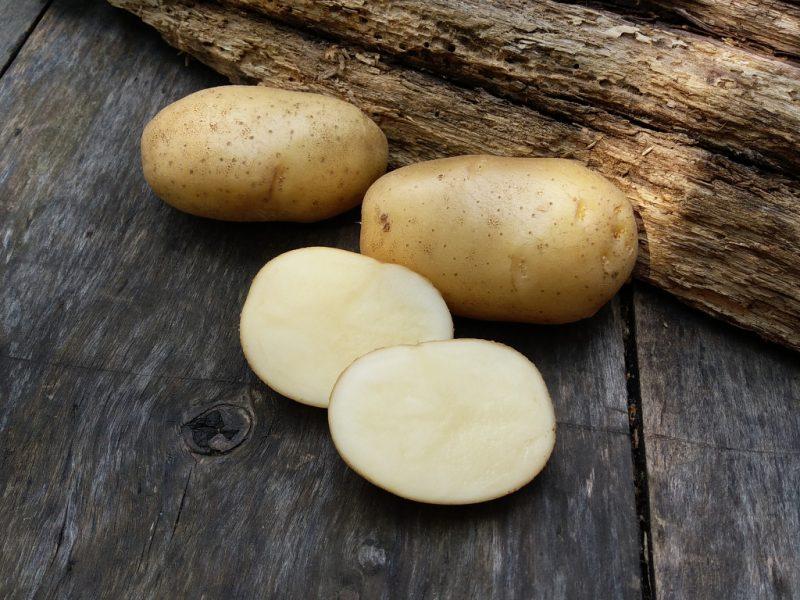 Картофель невка
