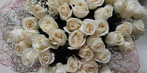 Красные и белые розы сонник